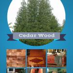 Versatile Cedar Wood