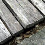 Warped Pine Wood
