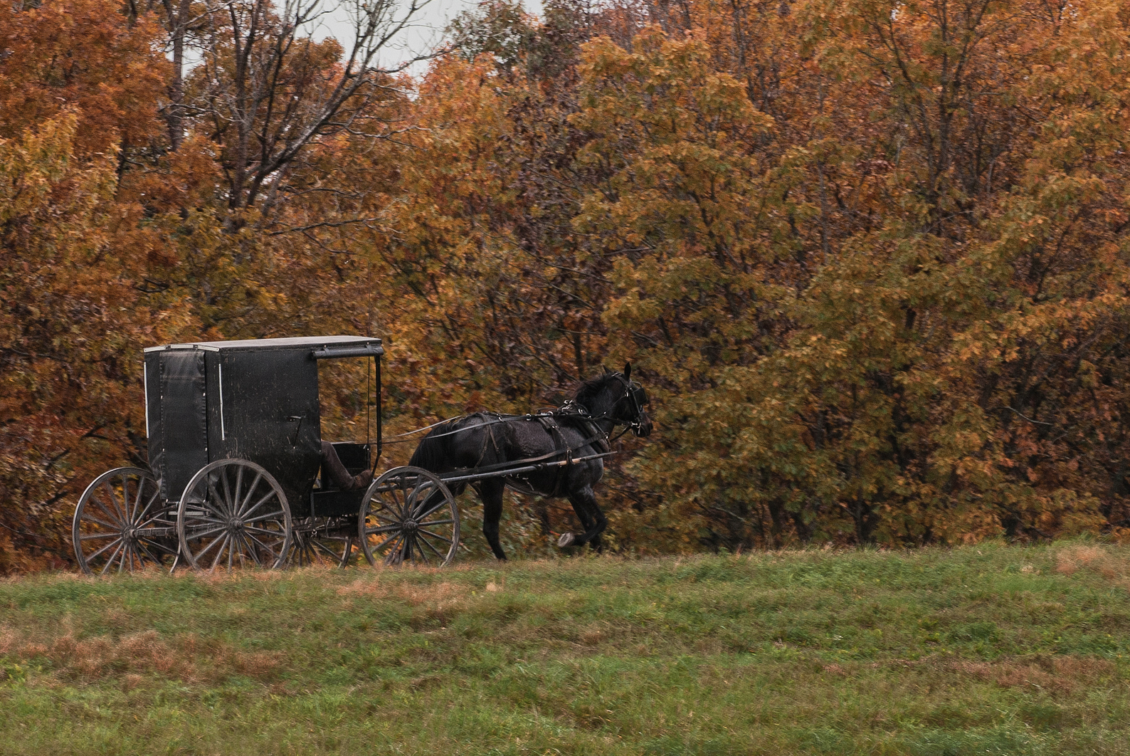 Everything You Want to Know About: Amish Transportation: Horse & Buggy