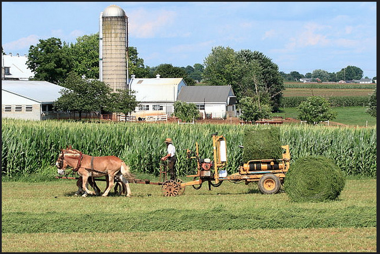Everything You Want to Know About: Amish Businesses
