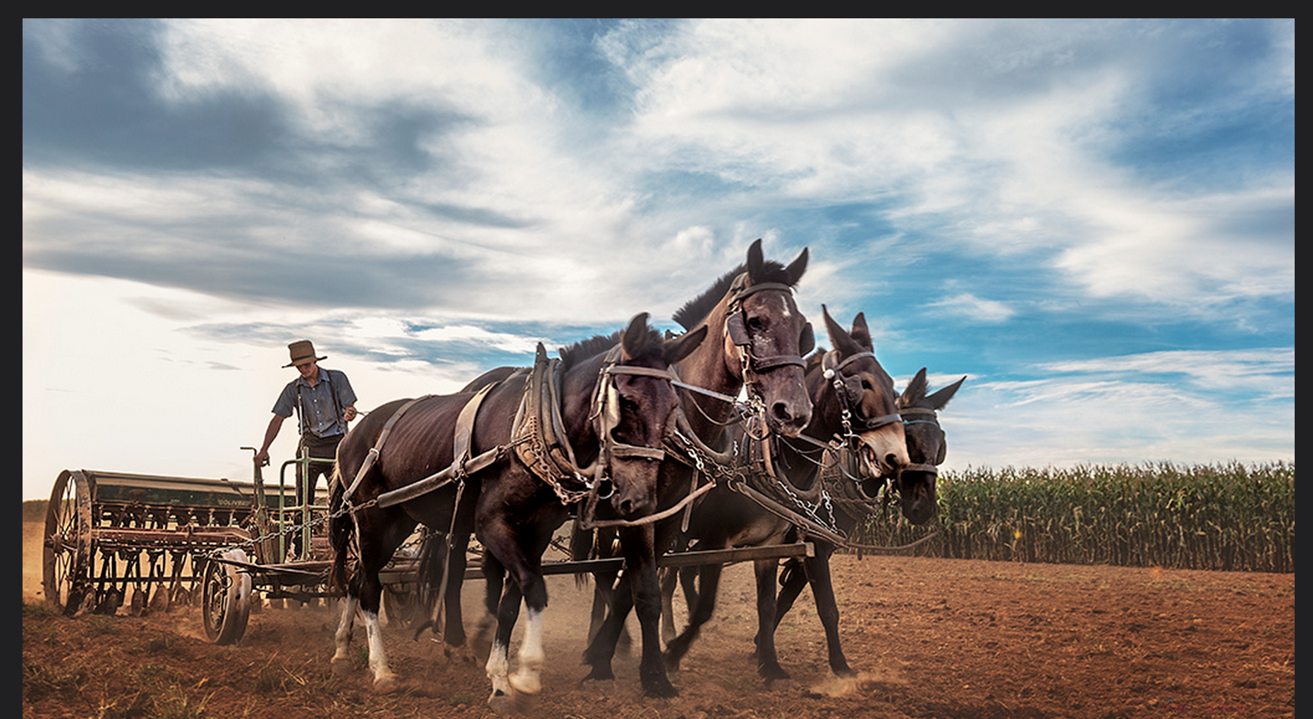 Everything You Want to Know About: Amish History : The Future