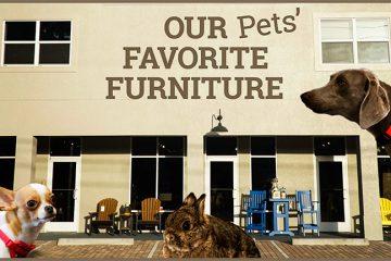 pets_fave_furniture_blog_main_image