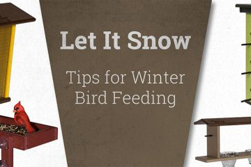 winter_bird_feeding_blog_main