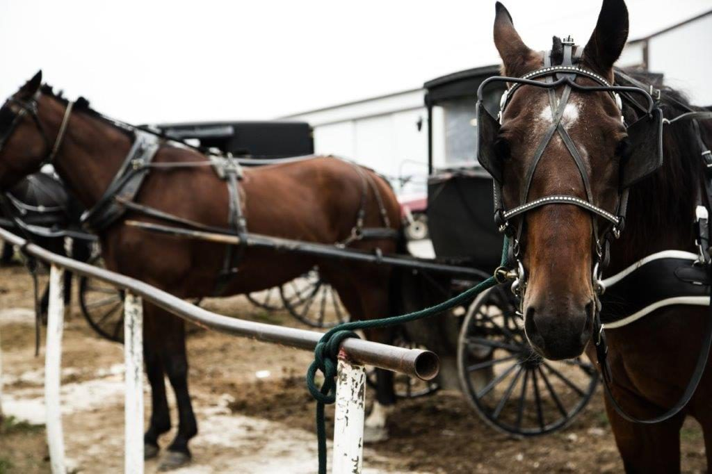 Horse and buggy parking outside of a woodshop.
