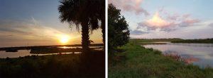 The Celery Fields in Sarasota, Florida