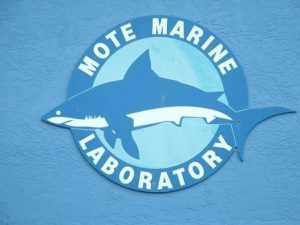 Mote Marine Laboratory in Sarasota, Florida