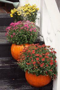 Pumpkin Planters.