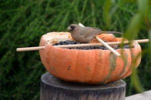 Pumpkin bird feeder.