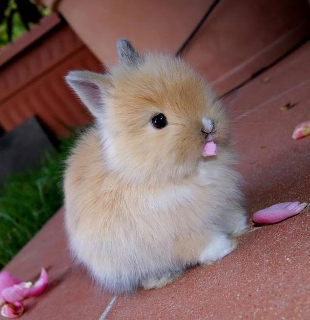 Cute bunny eating flowers via BoredPanda.com
