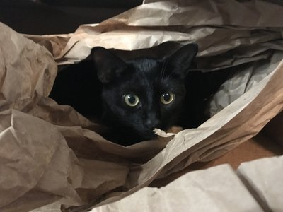 Leo in a box