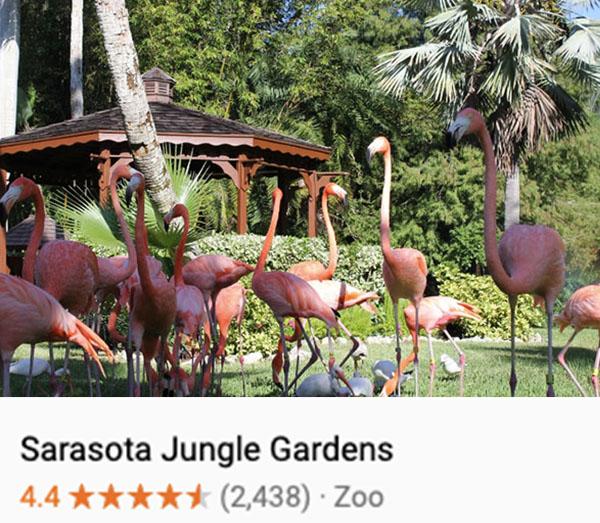 Flamingos wading at Sarasota Jungle Gardens
