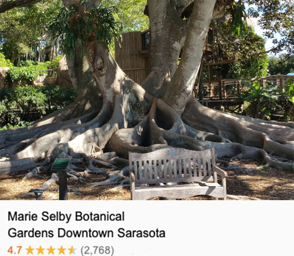 A wood bench sits in front of the sprawling network of a banyan tree's roots at the Marie Selby Botanical Gardens