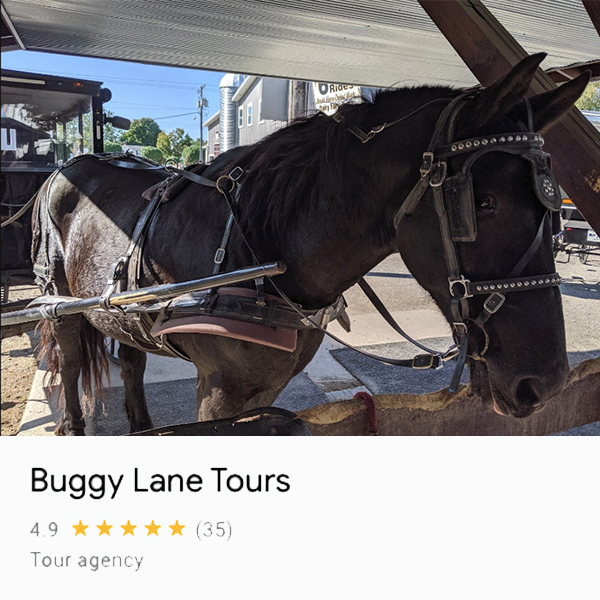 Photo of horse outside of the Buggy Lane Tours Building