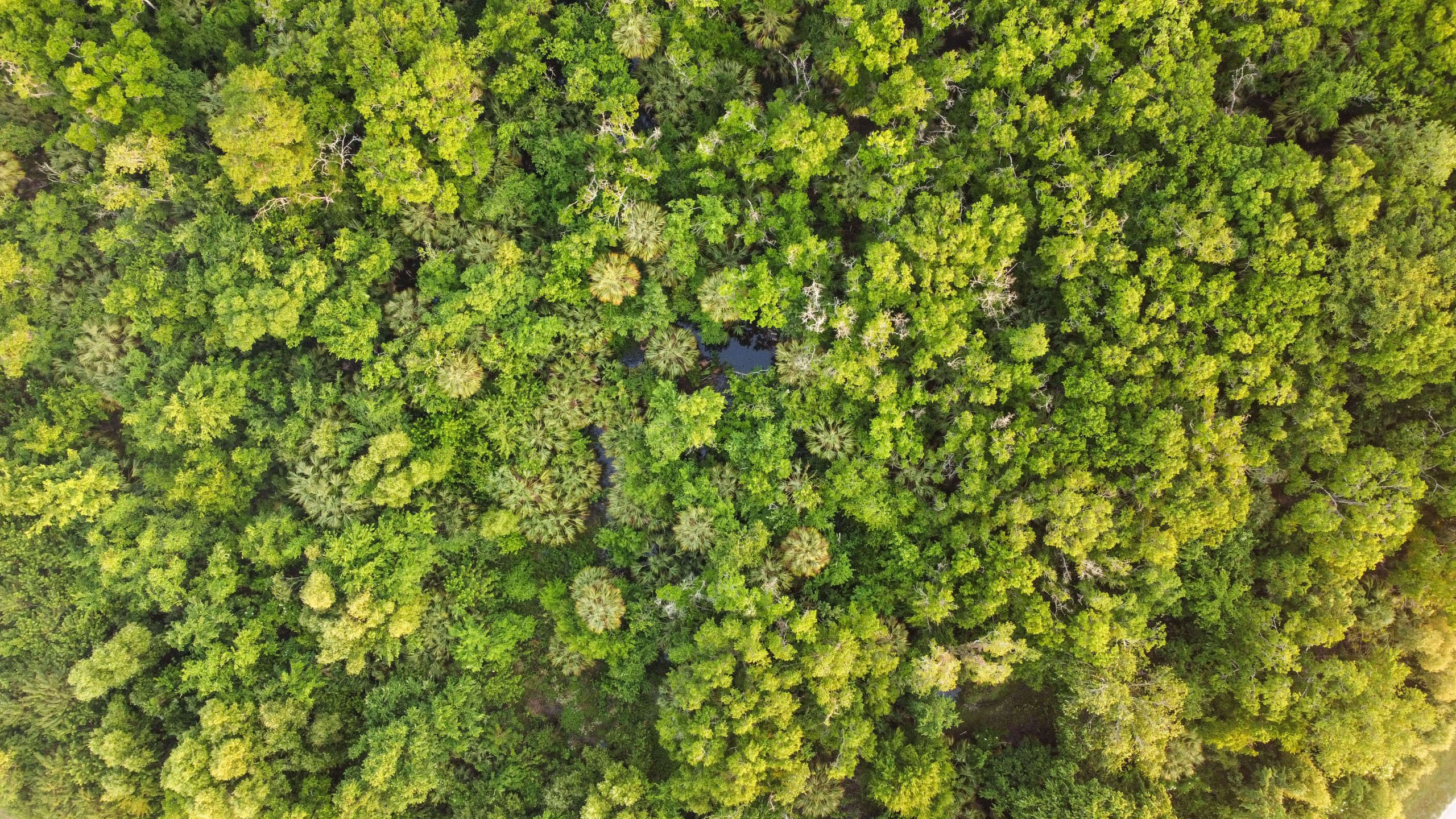 Aerial photo of forest from above, straight down